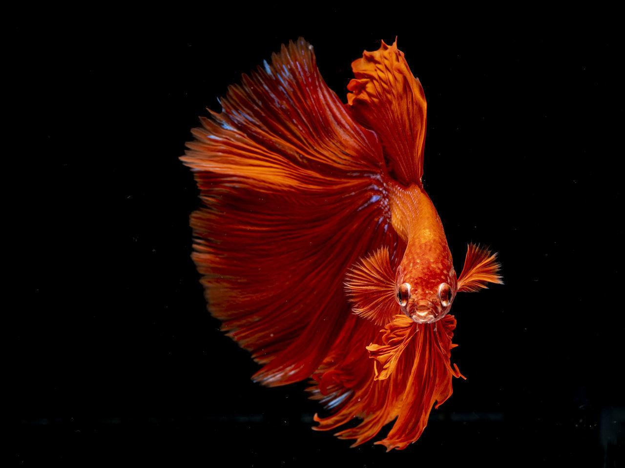 CLOSE-UP OF ORANGE FLOWER IN FISH