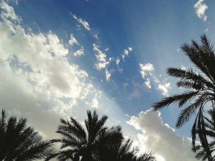 Popular Photos قروب مصورين العرب مصوري العرب Sky Blue Sky سبحان المصور متليلي الشعانبة خواطر أعشق تصوير السحب في جو السماء بشعاع شمس يخالج اللحظه.