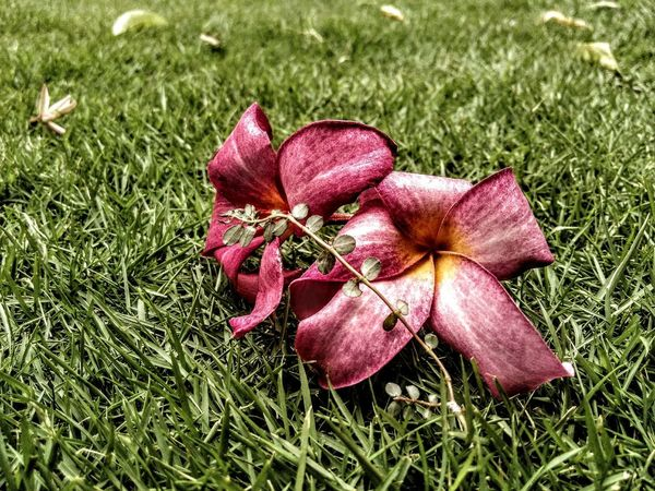 Ramdomshot flowers