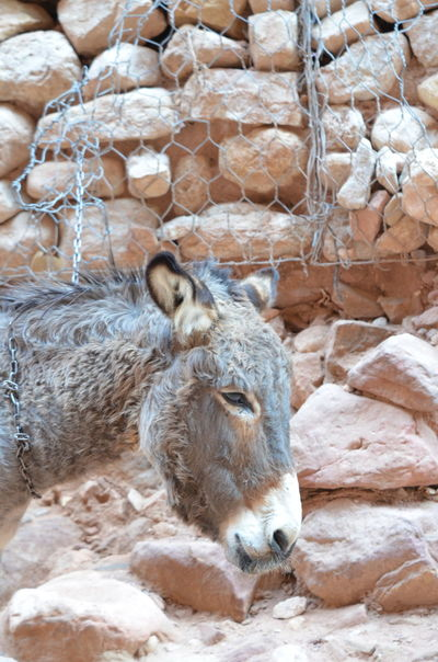 Donkeys Jordan Jordanien Petra Petra Jordan Petra, Jordan Travel Photography Animal Themes Close-up Domestic Animals Donkey Esel Nature One Animal Travel Destinations Working Donkey