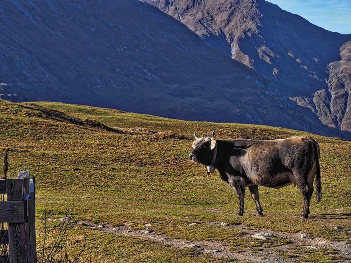 Graubünden, Alp