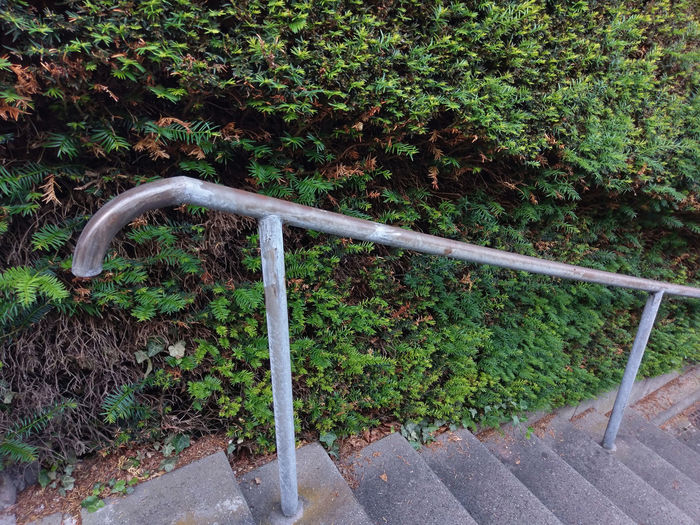 stairs with railing and hedge Care City Stairs Stairway Architecture Civilisation Cultivated Cultivation Downstairs Footpath Green Color Hedge Hedge Cutting High Angle View Maintenance Metal Nature No People Plant Railing Street Street Photography Upkeep