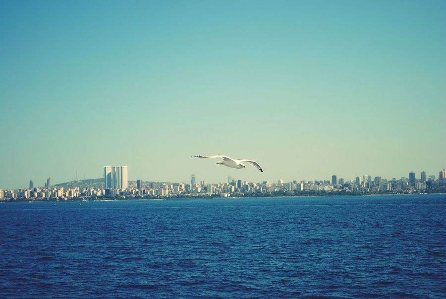 Istanbullovers Sea And Sky SEAGULL IN FLIGHT Flying Seagull City View  Skyviewers Turkey Marmarasea Bird Photography Birdwatching