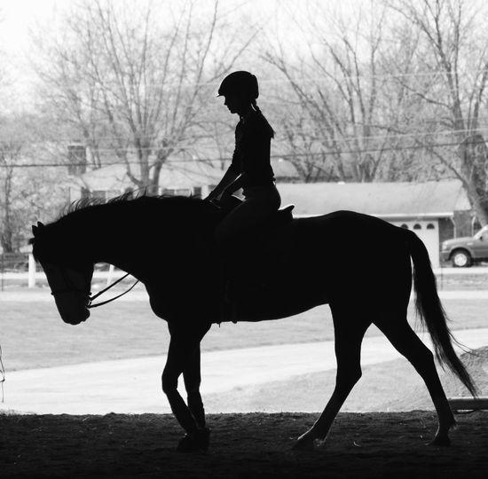 Silhouette Of Side View Of Female Jockey