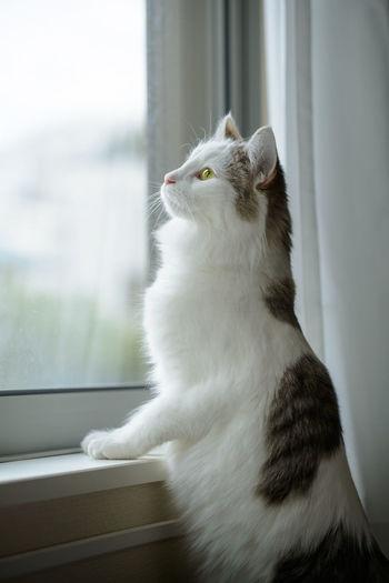 Cat standing beside window looking outside