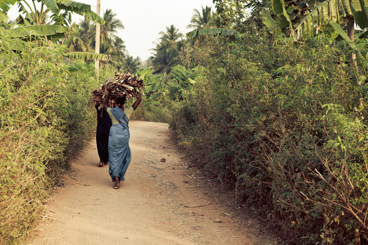 Rear View Full Length Of Women Carrying Logs Amidst Trees On Road