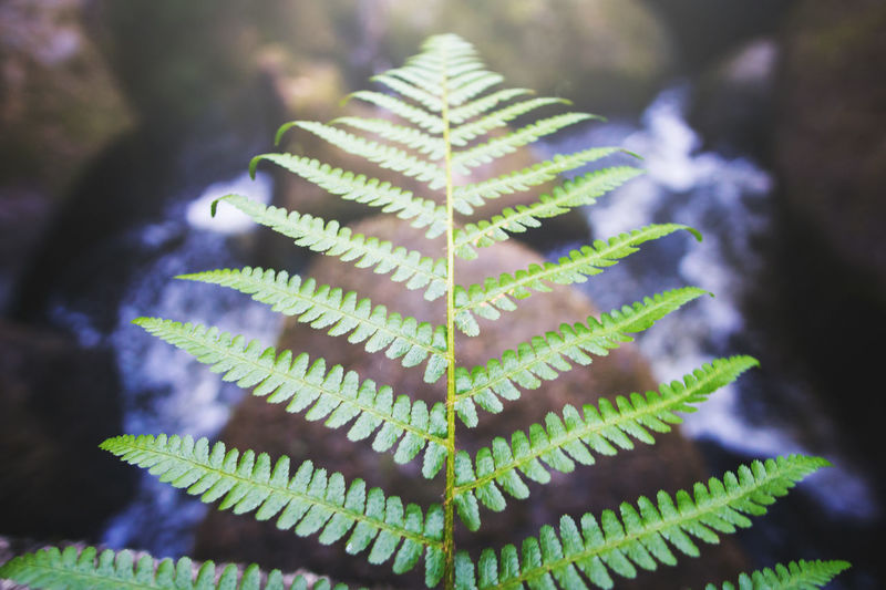 Close-up Farn Fern Flower Fluss Forest Freshness Gebirge Grass Green Green Color Hipster Landscape Mountain Natur Nature No People Outdoors Plant River Rocks Straight Sunrays Vintage Water
