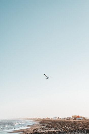 Bird flying over sea against clear sky