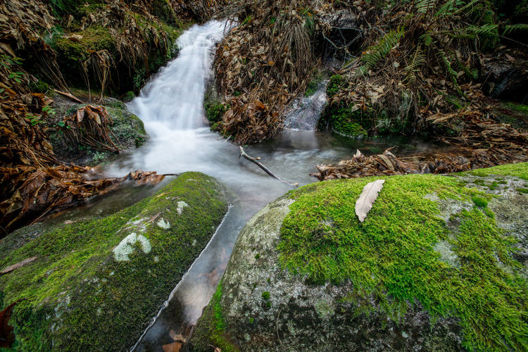 Water Tree Waterfall High Angle View Moss Stream - Flowing Water