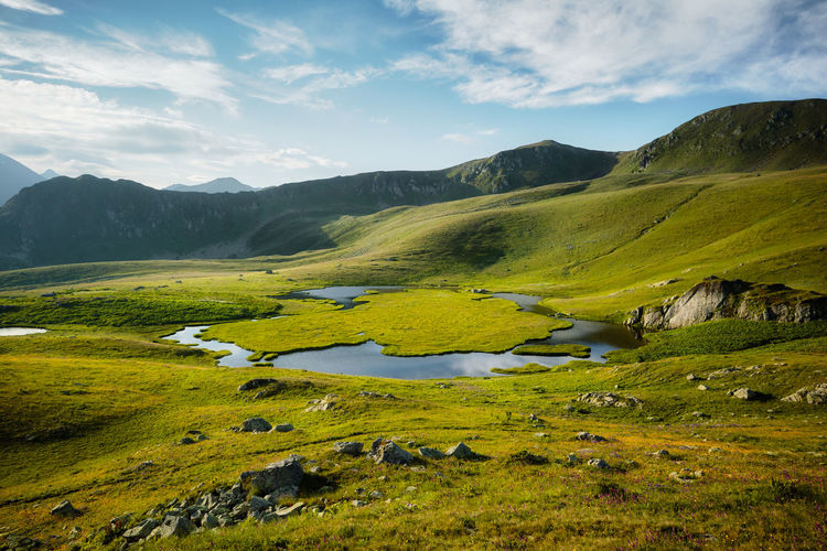 Mountain lake in summer with a flower meadow. blue sky with white clouds