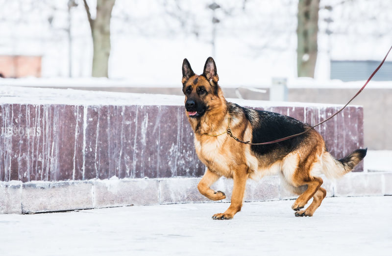 Portrait of a dog in snow