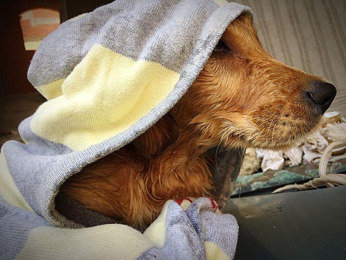 Dogs Day Domestic Animals Fashion Mask Fun Awesome Dog Golden Retriever Assinssinscreed First Eyeem Photo