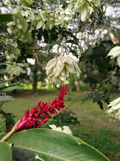 recordando al maestro Miguel Ángel Tree Flower Flower Head Branch Leaf Red Springtime Blossom Close-up Sky Butterfly - Insect Plant Life Botanical Garden Flowering Plant Tropical Flower Plant Part Fruit Tree Symbiotic Relationship