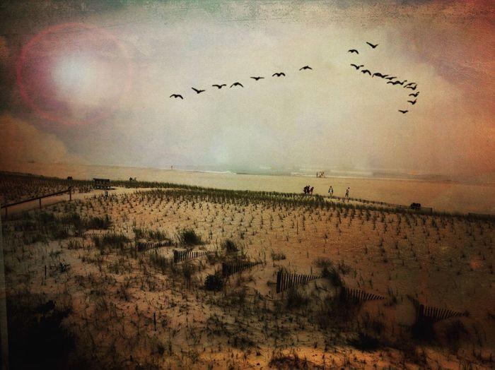 Summer flock -