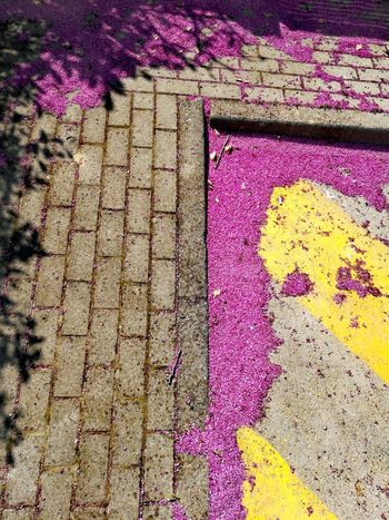 Powder Paint Multi Colored Yellow Backgrounds Full Frame Textured  Pattern Close-up Purple Holi Blooming Lilac Lavender FootPrint Painted Petal Hyacinth Flower Head