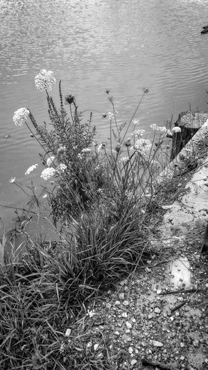 High angle view of plants on shore