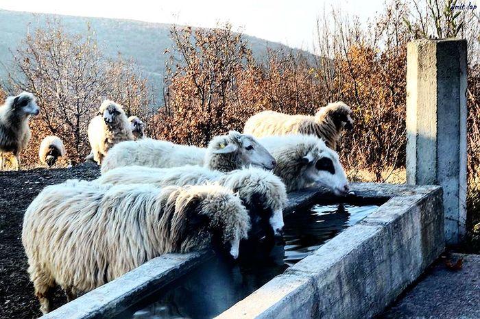 Nature Nature_collection Nature Photography Sheeps Sheep🐑 Doğa Akdosd Water Weekend Benimgözümden Benimobjektifimden Hayatinrenkleri Haftasonu Benimkadrajim Dogadan Sonbaharhavası Hayatakarken Beauty In Nature Photography