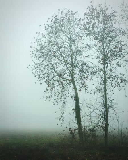 La nebbia avvolge, dissolve, crea magiche atmosfere. Fog Tree Mist Tranquility Beauty In Nature Foschia Nebbia Dreamlike