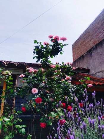 Beautiful Nature Outdoors. EyeEmNewHere EyeEm Selects Beauty In Nature Beautiful Outdoors Photograpghy  Pink Color Nature Green Green Color Orange Color White Color Flower Roses Sun Sky Pink Rose Outdoors Landscape