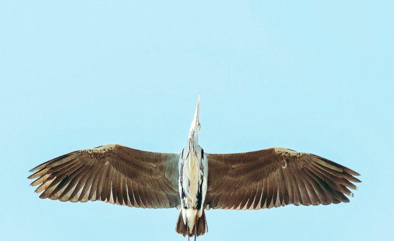 bird wings spread - HD1280×784