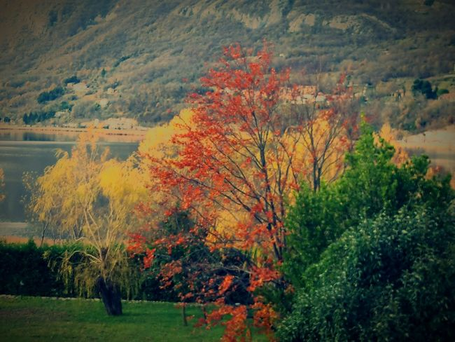 Mountain Landscape Water Tranquility Beauty In Nature Lake Scenics Nature Trees Autumn Stefanovalsecchi Red Color WeLoveNature  Wellow Water Reflections Water Italy🇮🇹 Grass Followme Civate Lago Di Annone Isella Be. Ready. EyeEmNewHere Summer Exploratorium