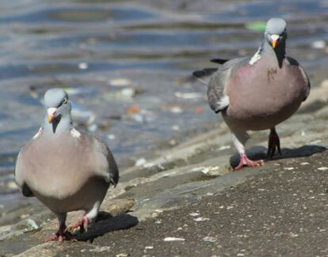 Taking Photos EyeEm Birds Sweet  Chaps