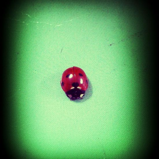 Uğur böceği ^^