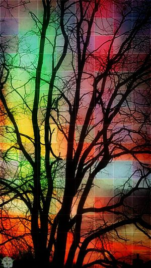 Playing with trees and masks Tree Sunset Beauty In Nature Lightmasks Offgrid