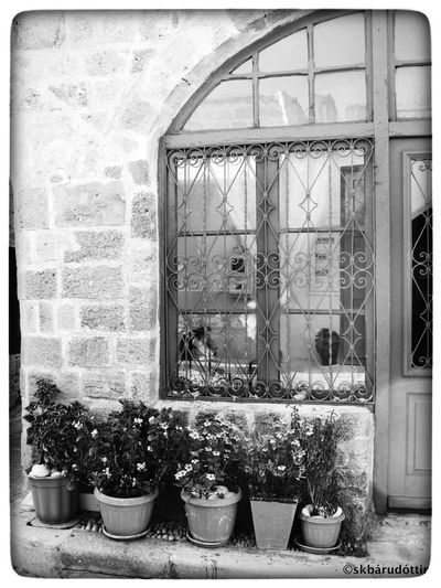 Houses And Windows Black & White Eye4photography  Flowerpot