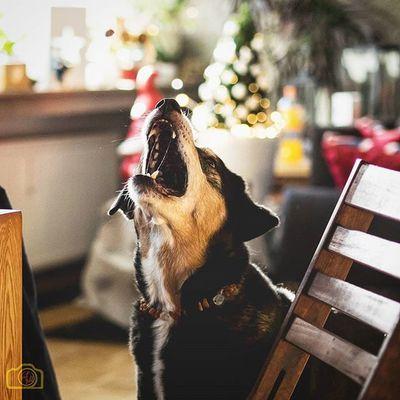 Dogsofinstagram Magic Dogoftheday Dog Hund Nachleckerchenschnappen Picofinstagram Picoftheday Olympus Omd EM1