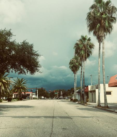 Preview on Hillview Grey Skies Asphalt Barren Thunder Clouds Sarasota Palm Tree Tree Tropical Climate Plant Sky Architecture Building Exterior Palm Tree Tree Tropical Climate Plant Sky Architecture Building Exterior Cloud - Sky No People Building