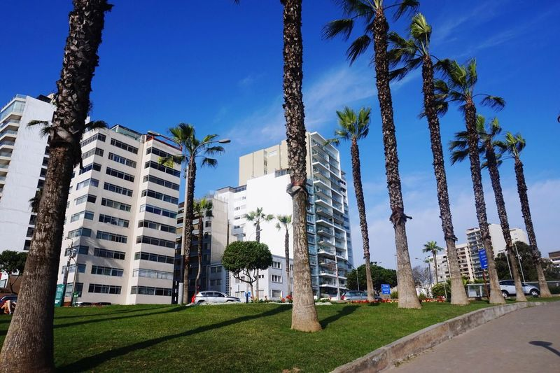 Architecture Built Structure Building Exterior Tree City Growth Day Low Angle View Outdoors Sky Blue Palm Tree Skyscraper No People Grass EyeEmNewHere