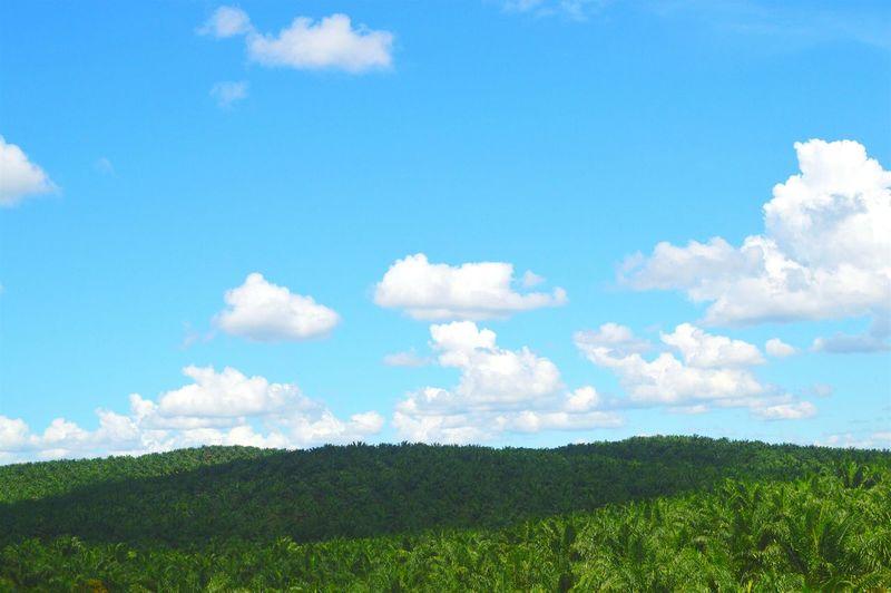 Malaysia Clouds Clouds And Sky Bluesky Malaysiatour Palms Skyporn Cloudporn Backpacktraveler Farm