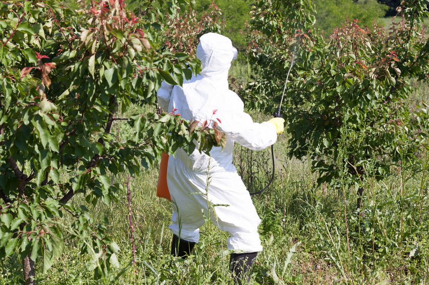 Man spraying toxic pesticides or insecticides in fruit orchard Tree Agriculture Farm Farmer Insecticide Spraying Suit Working Chemical Environment Fertilizer Fruit Garden Health Herbicide Orchard Pest Management Pesticide Pollutant Pollution Protective Spray Sprayer Toxic Treatment
