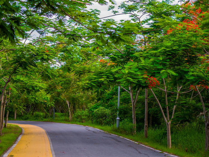 Thai view Tree Plant Road Transportation The Way Forward Green Color Growth Direction Nature No People Day Beauty In Nature Sign Tranquility Street Symbol City Outdoors Road Marking Tranquil Scene