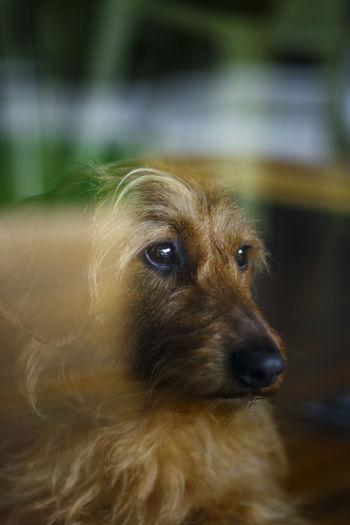 Close-up of dog looking away seen through window