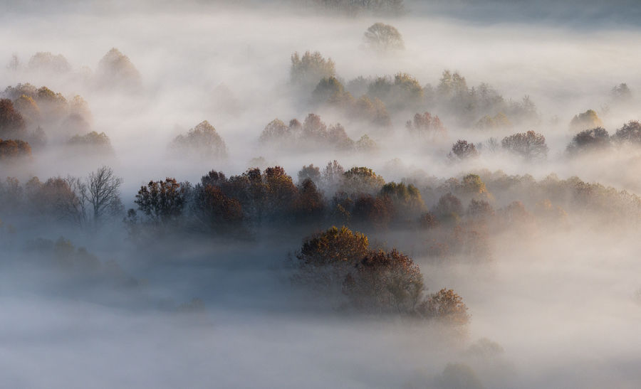 Morning mist Foggy Weather Misty Misty Morning Fog Morning Tree Trees Beauty In Nature Day Fog Foggy Foggy Day Foggy Landscape Foggy Morning Foggymorning Mist Misty Landscape Misty Morning Misty Mornings Nature No People Outdoors Scenics Sky Tranquility Trees And Nature