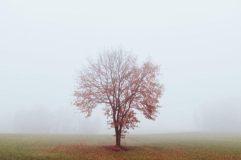Leica Tree