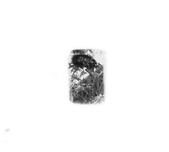 White Background Close-up No People Nature Day Double Exposure Analog Analogue Photography Blackandwhite Indoors  Film Photography Film Film 120 Holga120 Bnw Dblexpo Dblexp An Eye For Travel
