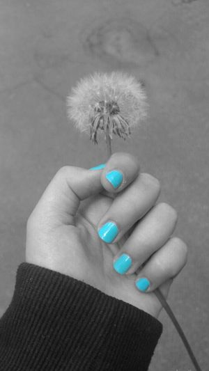Human Hand Holding Real People Flower Fingernail Nature Blackandwhite Blue Human Springtime Spring
