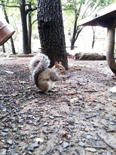 Squirrel Squirrel Closeup Squirrel Photo Squirrel Photography Squirrel Life Squirrel Standing