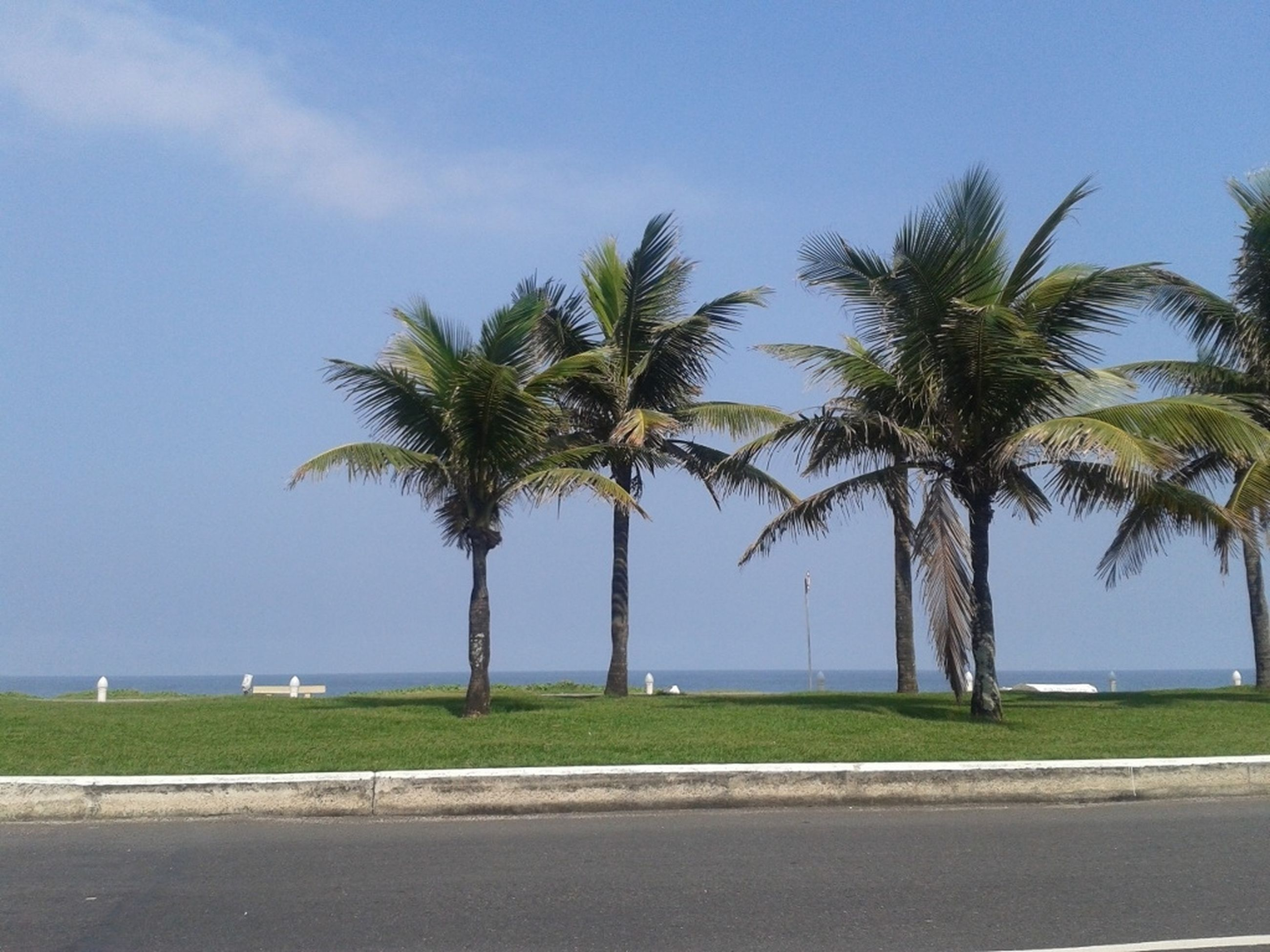 palm tree, tree, tranquility, sky, tranquil scene, road, growth, nature, sea, scenics, blue, beauty in nature, tree trunk, beach, water, clear sky, green color, day, transportation, grass