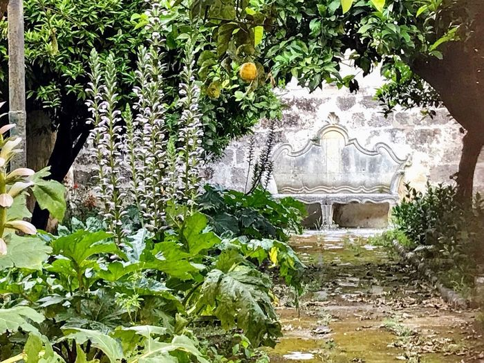 Giardino antico Plant Architecture Built Structure Day Growth No People Building Exterior Garden Plant Part Art And Craft Building Spirituality Nature History Belief Green Color Outdoors The Past Creativity Religion