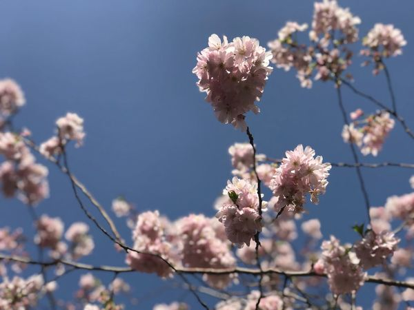 EyeEm Selects Flowering Plant Flower Plant Fragility Vulnerability  Beauty In Nature Low Angle View Nature Day Growth Freshness Sunlight Focus On Foreground Springtime Sky Blossom Tree Branch Close-up Petal