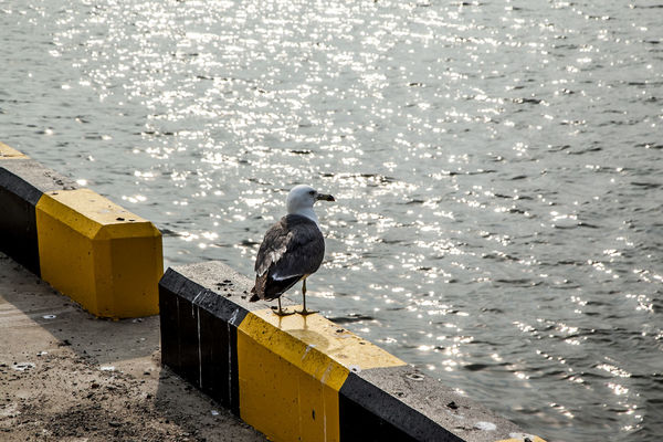 Animal Themes Animals In The Wild Arabatgil Beak Bird Day Leisure Activity Lifestyles Motion Nature No People Occupation One Animal Outdoors People Watching Perching Protection Relaxing Rippled RISK Seagull Side View Watching Water Wildlife