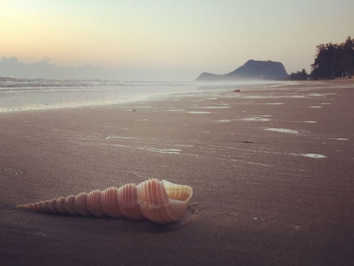 Close-up of seashell on beach against sky during sunset