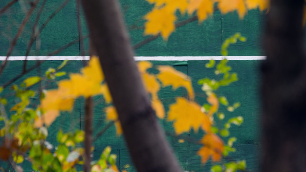 Practice wall... Autumn Green Lines Wall Beauty In Nature Close-up Day Lines And Shapes Nature No People Outdoors Plant Selective Focus Tree