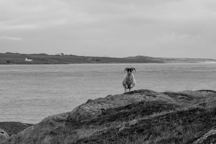 Dog sitting on rock by sea against sky