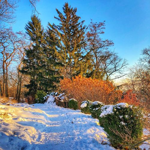 Winter Winter Wonderland Snow Covered Wintertime Plant Sky Tree Nature Growth Beauty In Nature No People Tranquility Day Blue Winter Sunlight Tranquil Scene Outdoors Low Angle View Scenics - Nature Cold Temperature Snow