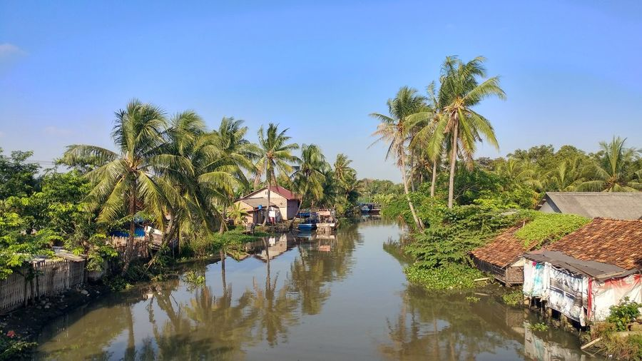 Canal amidst palm trees and houses against sky